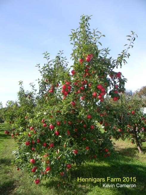 Hennigar's Apples